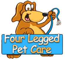 Dog Boarding Pet Sitting Dog Walking Miami and Palm Beach FL
